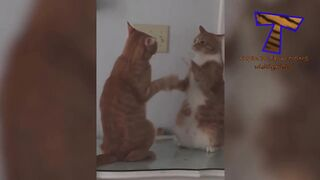 All kinds of FUNNY ANIMALS for all kinds of taste! LAUGH with us ????