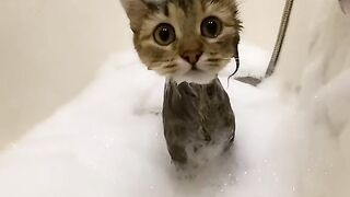 Funny Cat - Best Of The 2021 Funny Cat Videos - TRY NOT TO LAUGH!