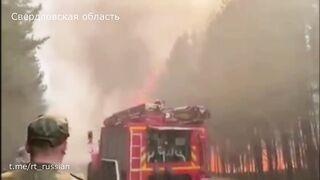 Лесные пожары выжигают