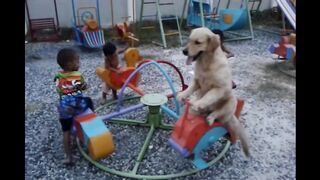 A Dog On A Carousel With His Friends