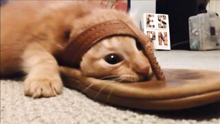 Cat Snagged By A Sandal