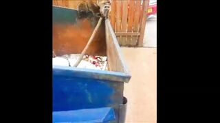 Runner Rescues Baby Raccoons From Dumpster
